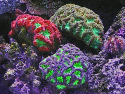 Marine sponges API